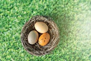 Easter eggs in a natural nest on a green background with grass texture photo