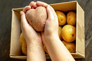 manos femeninas sosteniendo una patata vegetal fea en forma de corazón foto
