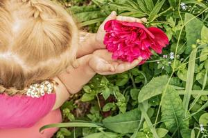A little girl holds a large flower of a pink peony in her hands in the garden photo