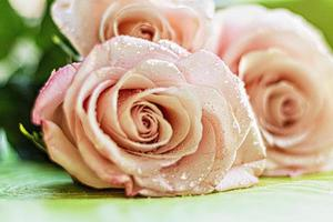 A bouquet of pink rose flowers photo