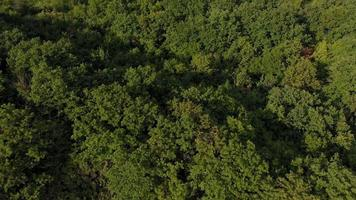 Forested Coastal Land video