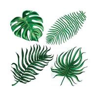 Vector colorful artistic set with tropical exotic leaves