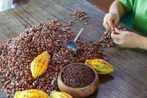 inspeccionar a mano la calidad de los granos de cacao foto
