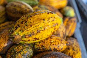 Cocoa and cocoa pods in crates for sale photo