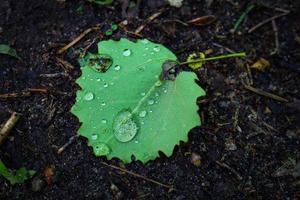 Hoja verde con gotas de lluvia sobre la suciedad del bosque negro oscuro foto