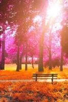 banco vacío en el parque, en el otoño de fantasía colores magenta y naranja de fondo de otoño foto