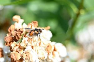 Dotted brown fly on withered flowers photo
