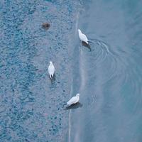 Seagulls on the water in the river photo