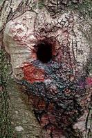 Fondo abstracto con textura de madera foto