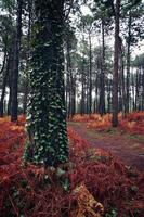 Trees in the forest in the nature in autumn season photo