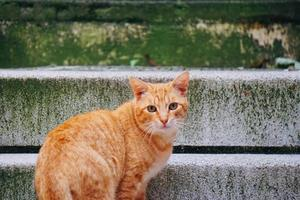 Beautiful brown stray cat portrait on the street photo