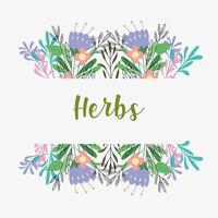 herbs flowers banner vector
