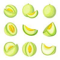 Melon Fruits Icon Collection vector