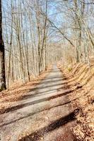 Beech forest, typical of the pre-alpine areas of northern Italy photo