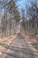 Bosque que rodea zavattarello, norte de Italia foto