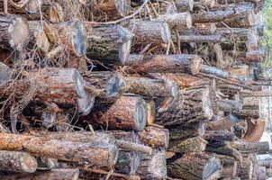 Detalle de una pila de madera cortada foto