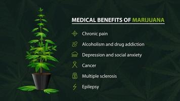Benefits uses of medical marijuana, green poster for website with bush of cannabis in a pot and infographic of benefits vector
