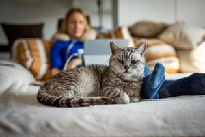 un lindo gato británico de pelo corto con una chica rubia foto