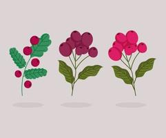 different banch trees with coffee seeds cartoon vector