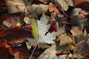 Leaves with water drops photo