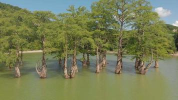 Mountain Lake Swamp video
