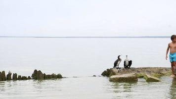interaction humaine avec les oiseaux sauvages sismologie nature sauvage video
