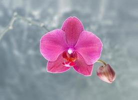 orquídea rosada sobre fondo borroso abstracto foto