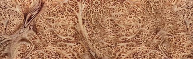 naturaleza salao burl madera rayada exótica madera hermosa foto