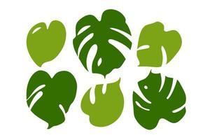 Modern set of tropical leaves monstera. Flat Vector Illustration Set Isolated on White.