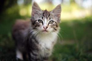Cute kitten in the grass photo