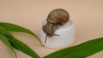 snail mucin cream with beauty skin care. High quality 4k footage video