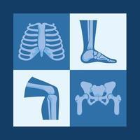 rheumatology bones designs vector