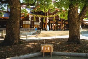 pareja casada, árbol de alcanfor, en, meiji, jingu, tokio, japón foto