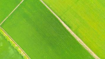 Aerial top view of the yellow and green rice fields photo