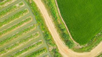 Aerial top view of green agricultural areas photo