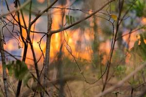 Wildfire, burning flames in the forest photo
