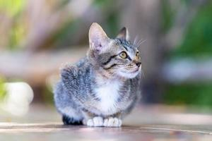 Young street grey cat photo
