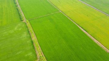 Aerial view of the yellow and green rice fields photo