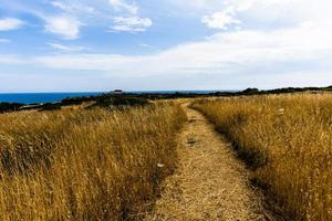 Landscape at Selinunte in Sicily, Italy photo