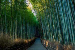 Surco de bambú arashiyama en Kioto, Japón foto