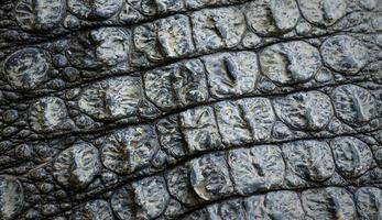 Primer plano de la imagen del fondo de textura de piel de cocodrilo foto