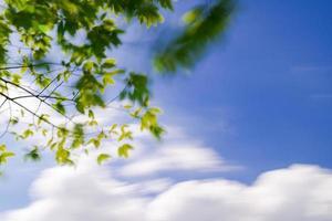 árbol verde en un hermoso parque bajo un cielo azul, larga exposición foto