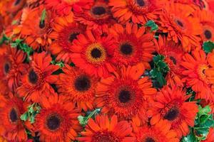 Flor de boda mixta, fondo floral multicolor foto