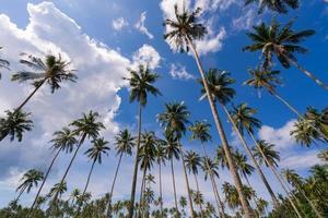 Palmera de coco bajo un cielo azul en la hermosa playa tropical foto