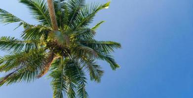 Hermosa palmera de coco bajo un cielo azul en la playa y el mar tropicales foto