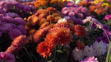 Sommerblumen im Garten Filmmaterial video