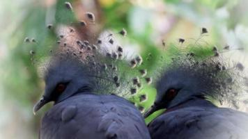 Birds Living in The Natural Forest video
