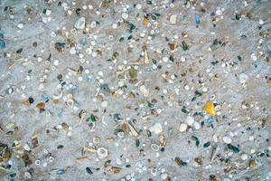 A lot of shells on sand photo