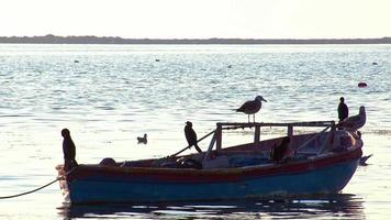 Seabirds Sunbathing and Relaxing On A Old Wooden Fishing Boat video