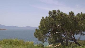 pinheiro e encosta da ilha do oceano video